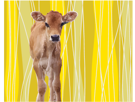 brown-calf